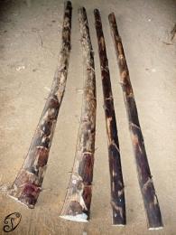 Didgeridoo z agáve